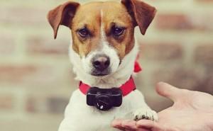 Что такое ошейник антилай, и стоит ли его покупать своей собаке?