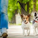 Как правильно выгуливать собаку, и сколько раз в день это нужно делать?
