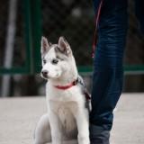 """Почему нужно обязательно обучить собаку команде """"Рядом""""?"""