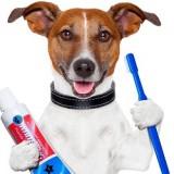 Бывает ли у собак зубной камень и можно ли избавиться от него в домашних условиях?