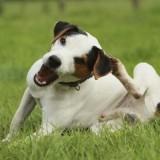 От чего у собаки может появиться зуд, и как помочь своему питомцу?
