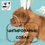 Подробная информация про чипирование собак