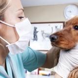 Причины носового кровотечения у собак, а также методы, как его остановить