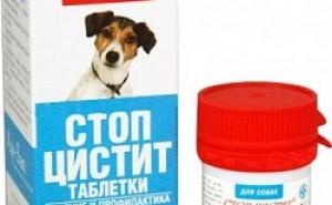 Эффективно ли средство Стоп Цистит для лечения болезней мочеполовой системы у собак?