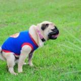 Можно ли давать слабительное собаке при запоре без рекомендаций ветеринара?