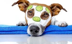 Правила ухода за щенком и взрослой собакой в домашних условиях