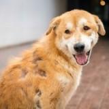 Что такое алопеция, и по каким причинам она может быть у собак?