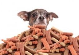 Почему лучше делать лакомства для собак дома и что для этого нужно?