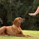 """Сложно ли обучить собаку команде """"Лежать"""" и как правильно выстроить процесс дрессировки?"""