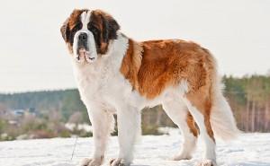 Как правильно выбрать кличку для собаки крупной породы?