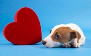 Насколько опасна сердечная недостаточность у собак, и как продлить питомцу жизнь?