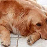 Основные признаки гастрита у собак, а также методы лечения болезни в домашних условиях