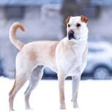 Наша собака получила травмы от собак в детстве. И теперь она не переносит других собак. Мы хотели бы завести еще одну собаку. Как их подружить?