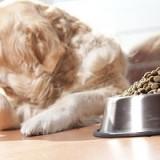 Почему собака может отказываться от еды, и как точно установить причину этой проблемы?