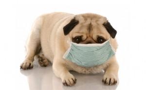 Что такое аденовироз у собак и как правильно его лечить?