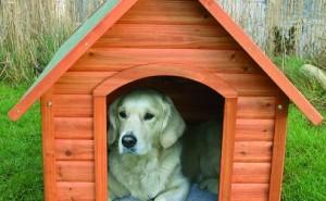 Как перевести собаку из квартиры на улицу и приучить к конуре?