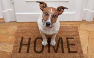 Лучшие породы собак для желающих завести питомца в квартире