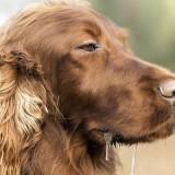 Нормально ли, что у собаки текут слюни, и почему происходит этот процесс?