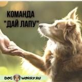 """Команда """"Дай лапу"""": особенности обучения щенка и взрослой собаки"""