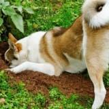Разбор причин, по которым собаки роют ямы в земле, а также методы отучения от этой привычки