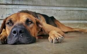 Бывает ли у собак насморк? Да, и мы расскажем о методах его лечения