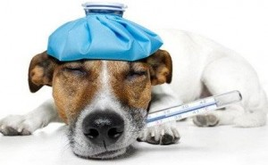 Какой должна быть температура у собак, и что указывает на ее изменения?