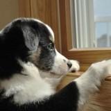 Лучшие методы и хитрости, которые помогут приучить щенка оставаться дома одному