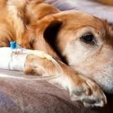 Симптомы почечной недостаточности у собак и методы лечения болезни