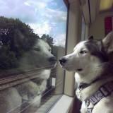 Собака не пьет воду после переезда, но при этом кушает и активно себя ведет