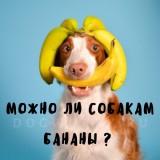 Польза и вред бананов для собак: советы ветеринара как правильно кормить питомца