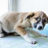 Причины дрожи у собак, и что нужно делать если ваш питомец дрожит?