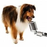 Сложно ли научить собаку команде голос и как правильно это делать без услуги дрессировщика?