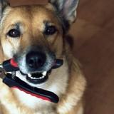 Правили проведения стрижки когтей у собак в домашних условиях