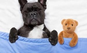 Как выяснить причину, почему собака дергается во сне?
