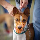 Собачий спорт: самая полная информация про курсинг для собак
