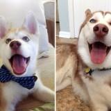Как понять, до какого возраста будет расти ваша собака?