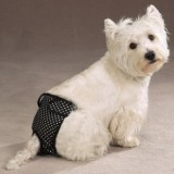 Что такое течка у собак, как часто она бывает и сколько длится?