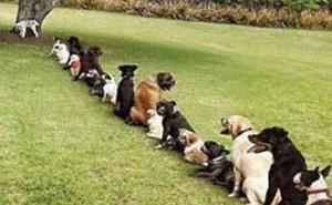 Как эффективно использовать систему поощрений и наказаний, приучая собаку к туалету на улице?