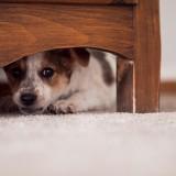Что делать, если собака постоянно прячется в темные места?