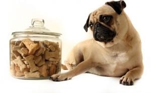 Как выявить аллергию на корм у собаки и как оказать первую помощь?