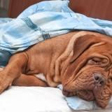 Почему нужно везти собаку к ветеринару когда у нее болит живот, а не заниматься самолечением?