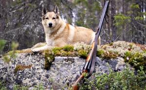 Как правильно выбрать кличку для собаки охотничьей породы?