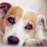 Пути заражения собак хламидиозом, и методы лечения этого заболевания