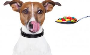Какие витамины нужно добавлять в пищу собаки при беременности и лактации? Подробный разбор рациона питания