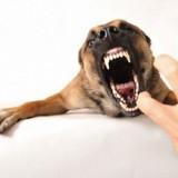 Как самостоятельно отучить собаку рычать на хозяина?