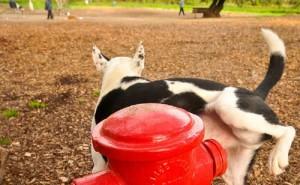 Стоит ли паниковать, если у собаки появилась кровь в моче?