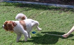 В каких случаях нужно собирать мочу у собак, и как это правильно сделать для анализа?