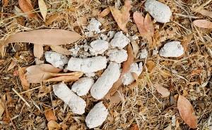 Причины появления у собаки белого кала, а также методы устранения этого симптома