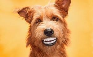 Как происходит смена зубов у собак, и что при этом должен делать хозяин?