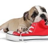 Какие методы дрессировки помогут отучить собаку грызть обувь?
